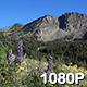 High Mountain Wildflowers - VideoHive Item for Sale