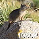 Ground Squirrel in Field of Flowers - VideoHive Item for Sale