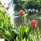 Flowers and Fountain in City Park - VideoHive Item for Sale