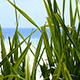 Green Grass on Beach - VideoHive Item for Sale