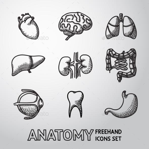 Internal Human Organs Handdrawn Icons Set - Icons