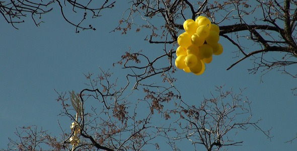 Yellow Balloons on the Tree
