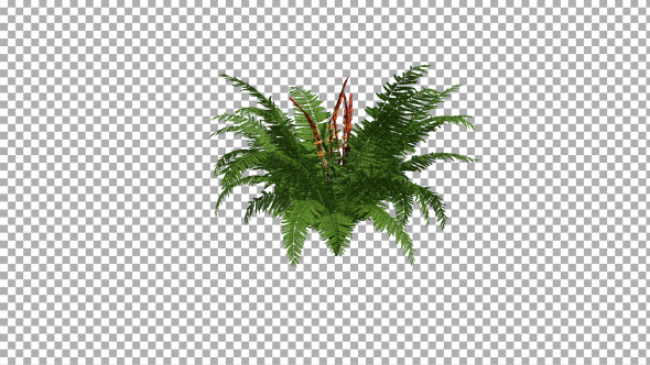 Fern On The Wind Isolated 1