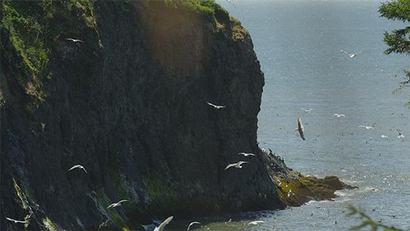 Seagulls Soaring