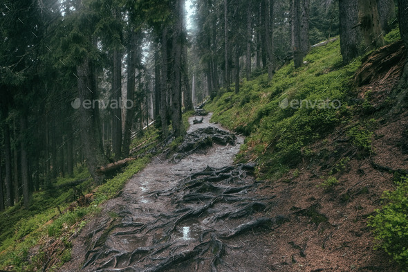 rain trail - Stock Photo - Images