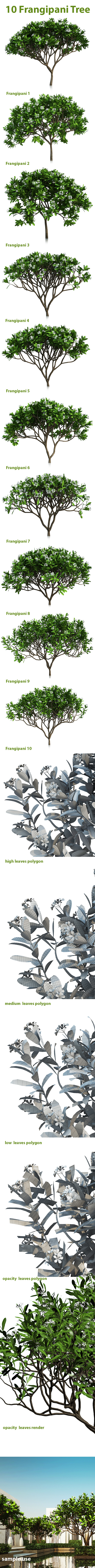 10 Frangipani Tree - 3DOcean Item for Sale