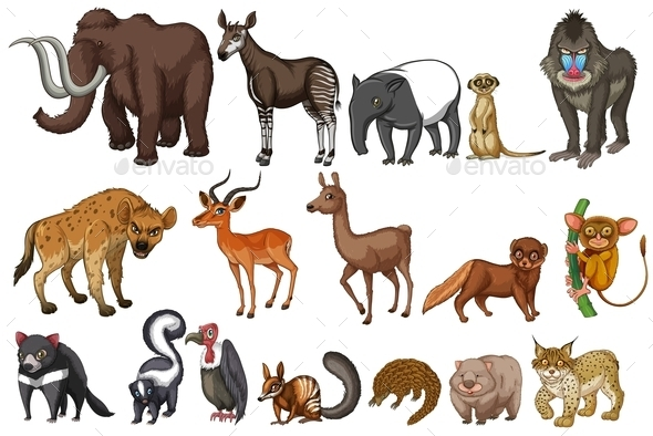 Rare Animals - Animals Characters