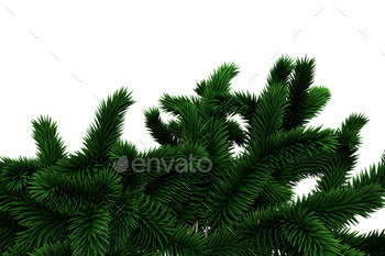 Fir tree branches on white background