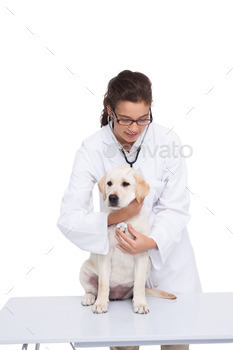 Veterinarian doing check up at a dog with a stethoscope on white background
