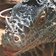 Lizard Eating - VideoHive Item for Sale