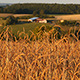 Wheat Field With Farm Buildings In The Background - VideoHive Item for Sale