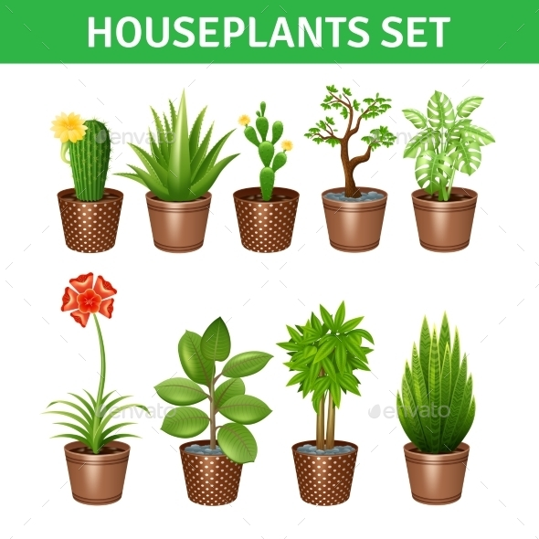 Houseplants Realistic Icons Set  - Flowers & Plants Nature