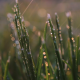 Golden Hour Rain - Grass - VideoHive Item for Sale
