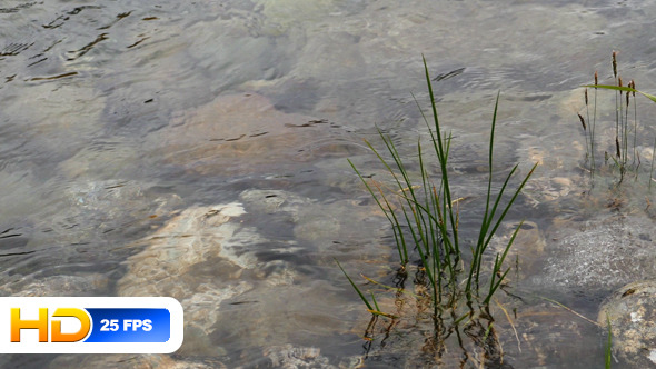Water Plants and Stones in Clear Water