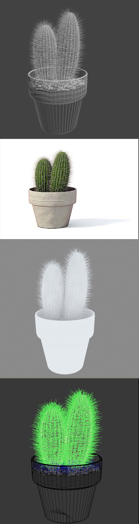3D Cactus pot plant model