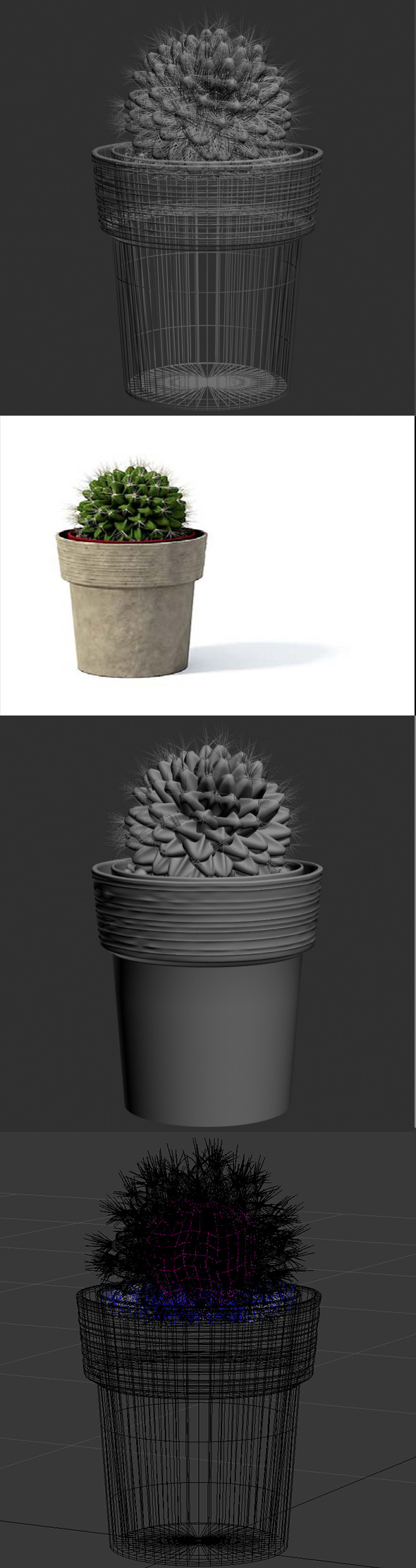 3D Cactus pot plant model 2 - 3DOcean Item for Sale