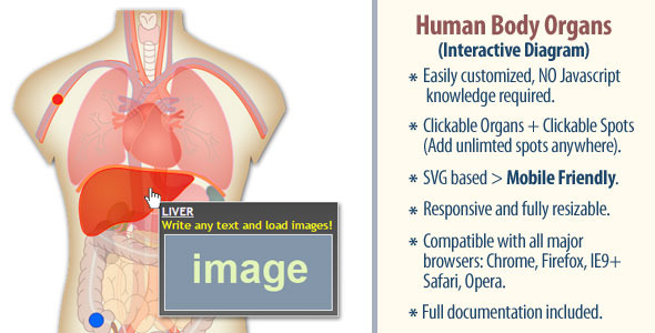Interactive Human Body Organs Diagram - CodeCanyon Item for Sale
