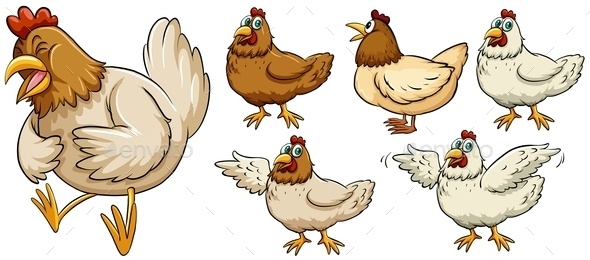Farm Chicken in Different Poses - Animals Characters