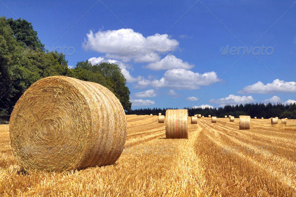 Hay bales in a field - Stock Photo - Images