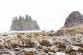 La Push Beach - PhotoDune Item for Sale
