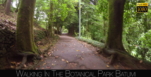 Botanical Park In Batumi 5