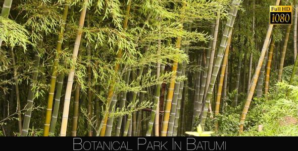 Botanical Park In Batumi 9