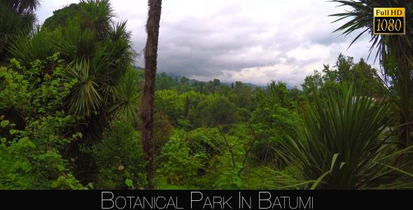 Botanical Park In Batumi 16