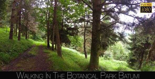 Botanical Park In Batumi 33