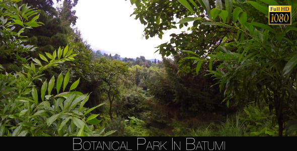 Botanical Park In Batumi 34