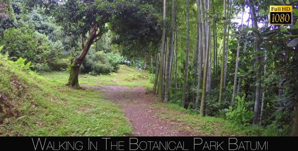 Botanical Park In Batumi 41