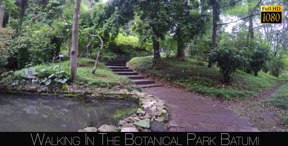 Botanical Park In Batumi 44