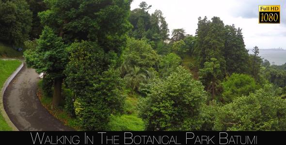 Botanical Park In Batumi 49