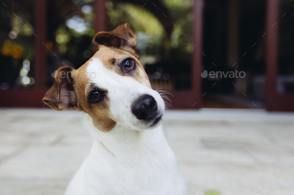Dog looking curious - Stock Photo - Images