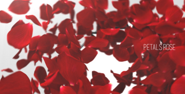 Petals Rose Reveal