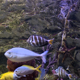 The Fish in Aquarium - VideoHive Item for Sale