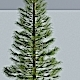 Siberian Spruce - 3DOcean Item for Sale