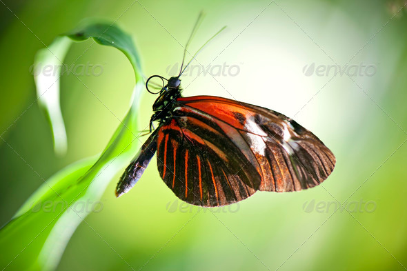 Small Postman Butterfly - Stock Photo - Images