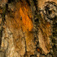 tree bark - GraphicRiver Item for Sale
