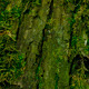 Tree Moss - GraphicRiver Item for Sale