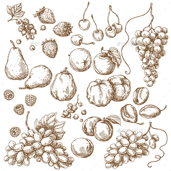 Set of Fruits  Sketch  - Food Objects