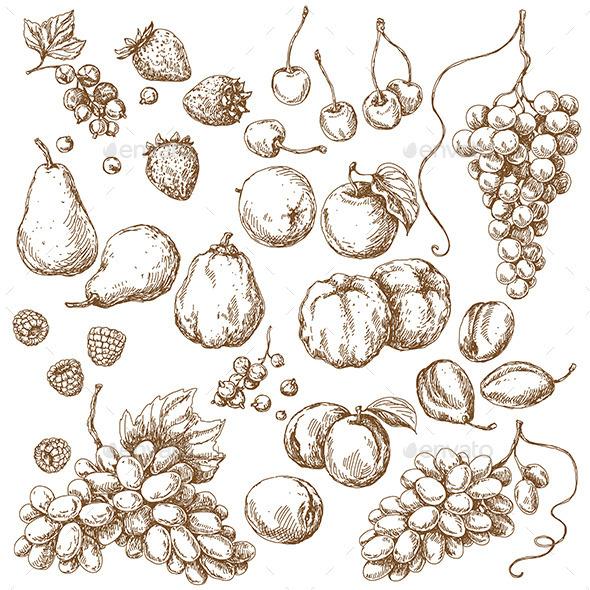 Set of Fruits Sketch