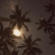 Beach At Night With a Full Moon And Coconut Palms - VideoHive Item for Sale