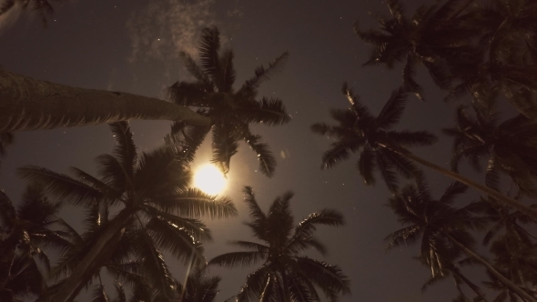 Beach At Night With a Full Moon And Coconut Palms