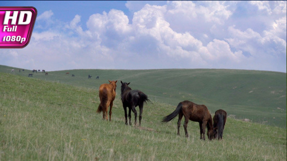 Horses on a Hilly Pasture