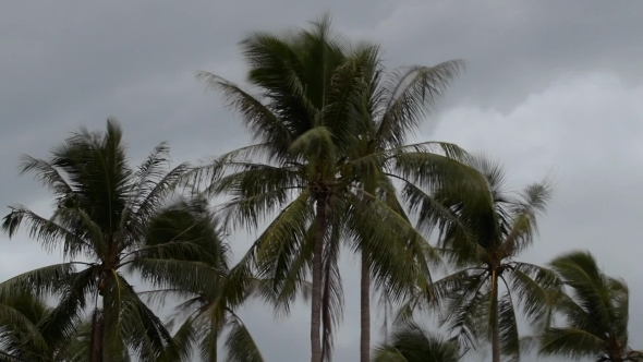 Cloudy Gloomy Evening Sky With Coconut Palm Trees