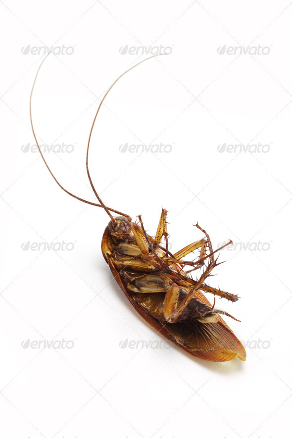 Dead cockroach - Stock Photo - Images