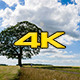 Tree And Farm Road - VideoHive Item for Sale