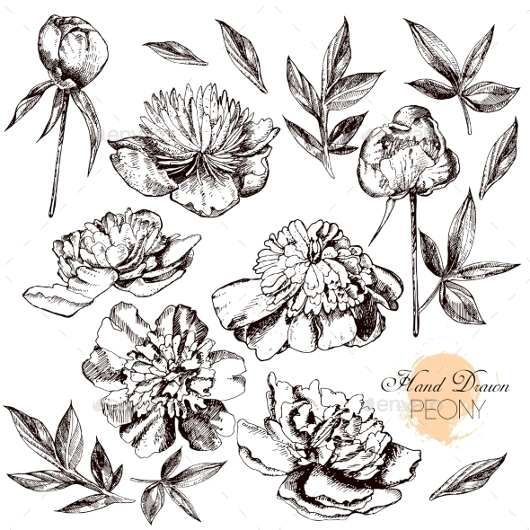 Engraved Hand Drawn Illustrations Of Ornate - Flowers & Plants Nature