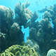 Coral Reef - VideoHive Item for Sale