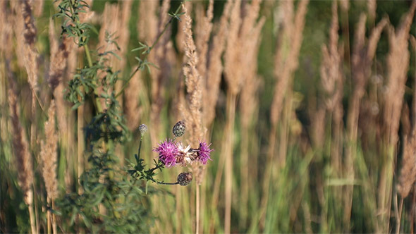 Flower on Wind 2